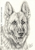 German Shepherd dog portirat pencil graphite drawing art by Leanne Wildermuth