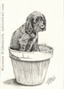 Dog puppy portrait English Cocker Spaniel pencil graphite drawing art by Leanne Wildermuth