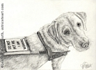 Dog portrait yellow Labrador retriever pencil graphite drawing art by Leanne Wildermuth