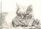 cat portrait pencil graphite drawing art by Leanne Wildermuth