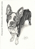 custom dog boston terrier portrait pencil graphite drawing art by Leanne Wildermuth