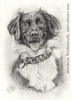 custom dog border collie portrait pencil graphite drawing art by Leanne Wildermuth