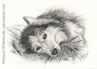 custom dog portrait siberian husky pencil graphite drawing art by Leanne Wildermuth