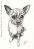 custom dog portrait Chihuahua pencil graphite drawing art by Leanne Wildermuth