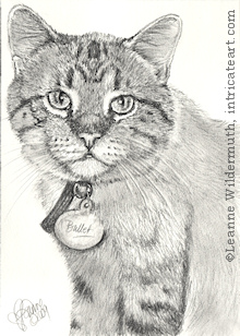 custom cat portrait pencil graphite drawing art by Leanne Wildermuth