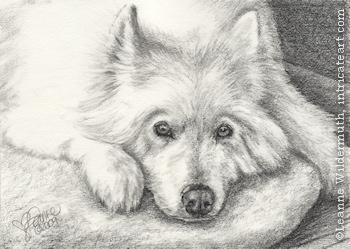 custom dog Samoyed portrait pencil graphite drawing art by Leanne Wildermuth