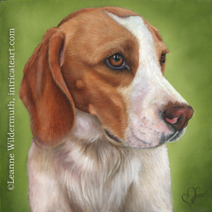 custom dog Beagle portrait oil painting art by Leanne Wildermuth