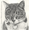 Custom Cat Portrait tabby graphite pencil drawing original traditional realistic fine art