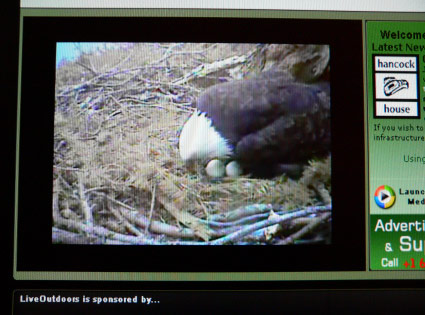 eagle cam nest eggs