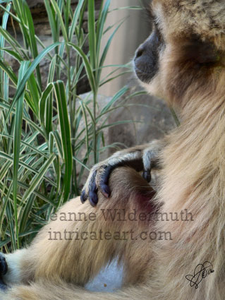 gibbon monkey art digital photography print