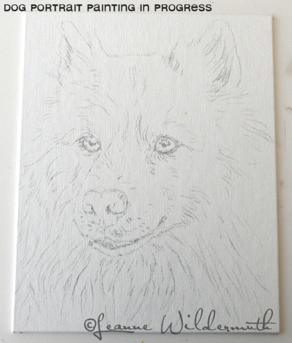 custom dog portrait american eskimo original art painting sketch work in progress' class=