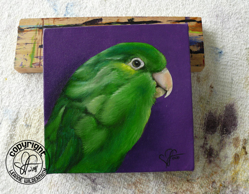 custom bird portrait pacific parrotlet oil painting leanne wildermuth