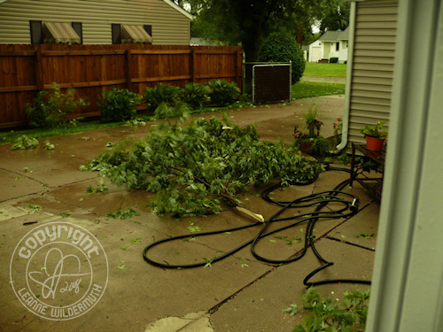 quad cities derecho storm tree torn leanne wildermuth