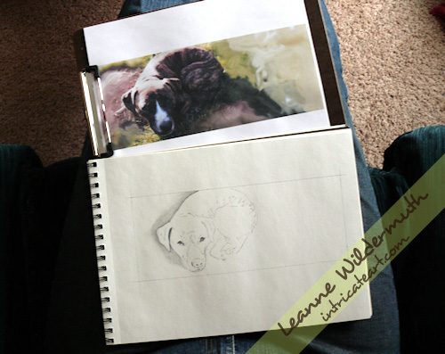pit bull pencil custom portrait progress
