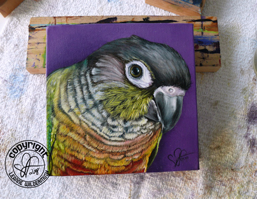 custom bird parrot portrait oil painting leanne wildermuth Yellow-Sided Green Cheeked Conure