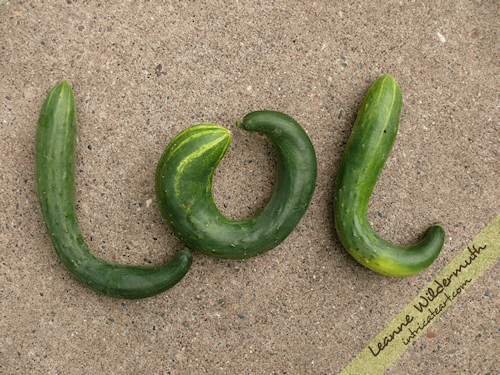 lol cucumbers funny vegetable photo by Leanne Wildermuth