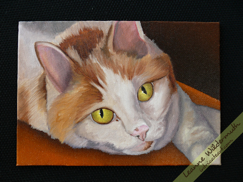 cat portrait oil painting progress by Leanne Wildermuth