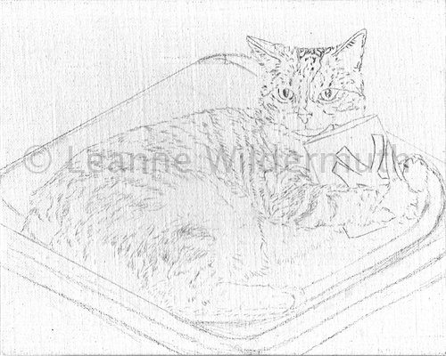 Moggie cat portrait sketch on canvas by Leanne Wildermuth