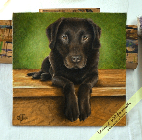 chocolate lab dog portrait oil painting by Leanne Wildermuth
