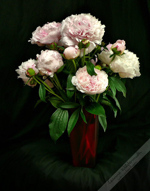 peony bouquet photo by Leanne Wildermuth