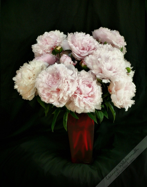 peony bouquet by Leanne Wildermuth