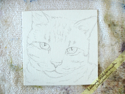 tiger cat portrait work in progress sketch by Leanne Wildermuth