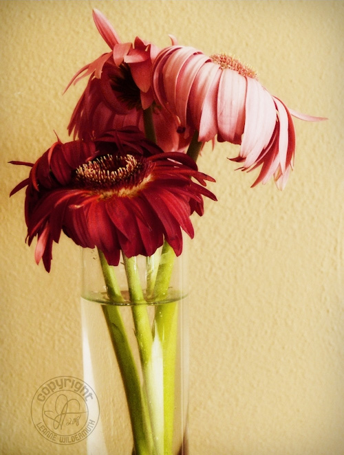 gerbera daisy bouquet sad