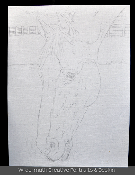 Chestnut horse oil painting portrait sketch by Leanne Wildermuth