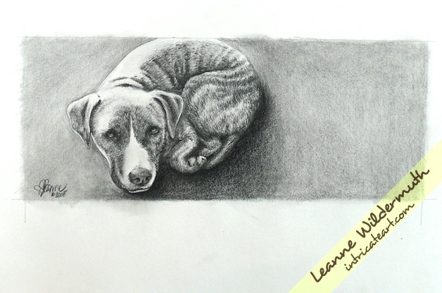 pit bull dog portrait by leanne wildermuth