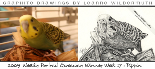 budgie parakeet custom bird portrait drawing by Leanne Wildermuth