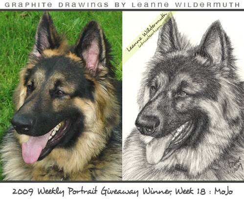 dog portrait german shepherd pencil drawing by Leanne Wildermuth