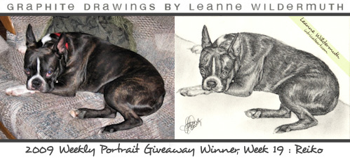 boston terrier pencil portrait by Leanne Wildermuth