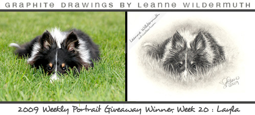 Sheltie dog portrait by Leanne Wildermuth