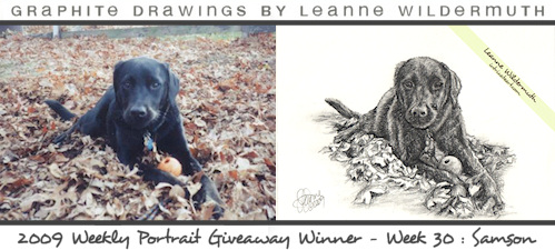 Dog portrait black lab pencil drawing by Leanne Wildermuth