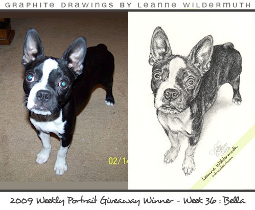 Boston Terrier custom pencil portrait
