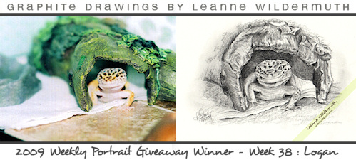 leopard gecko reptile pencil portrait by Leanne Wildermuth
