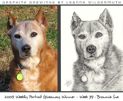dog portrait pencil drawing by Leanne Wildermuth