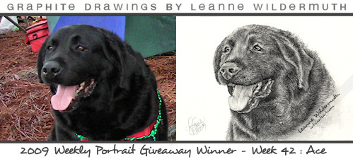 black lab dog portrait giveaway portrait by Leanne Wildermuth