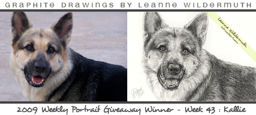 german shepherd portrait pencil drawing by Leanne Wildermuth