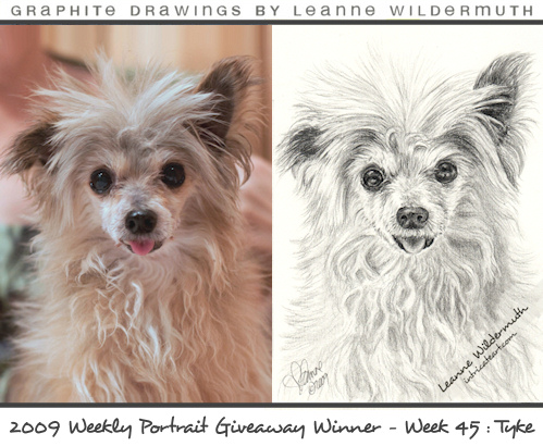 custom dog portrait drawing Chinese Crested Powderpuff by Leanne Wildermuth