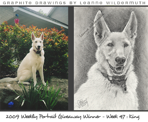 white german shepherd portrait drawing by Leanne Wildermuth