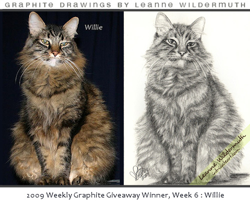 cat portrait drawing maine coone Willie by Leanne Wildermuth